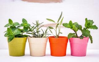 Row of potted herbs