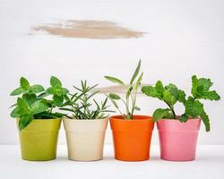 hierbas en macetas de colores foto