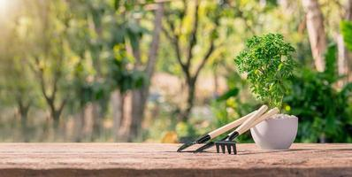 plantar árboles en macetas, concepto de plantas de amor, amar el medio ambiente foto