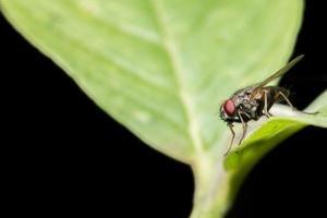 macro mosca insecto foto