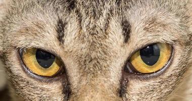 Cat eye animal photo