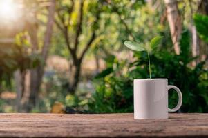 plantar árboles en macetas, concepto de plantas de amor, amar el medio ambiente