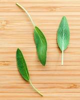 Three sage leaves photo