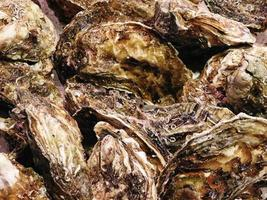 Close-up of oyster shells photo