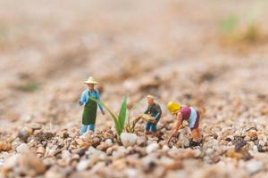 Miniature farmers working on a plot in the desert, agriculture concept photo