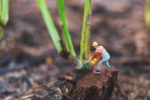 Trabajador en miniatura que trabaja con un árbol, protegiendo el concepto de naturaleza foto