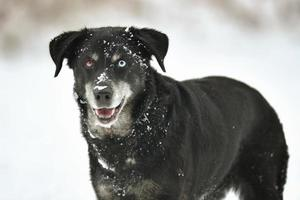 Portrait of cute black dog in white fresh snow