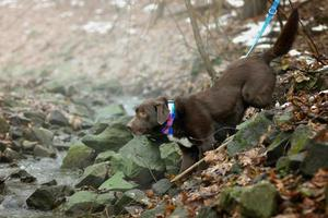 Dog hiking in the woods photo