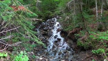 voir les scènes de rivière dans la forêt, parc national dombai, caucase, russie