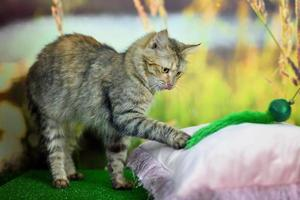 Tabby cat playing with a green toy photo