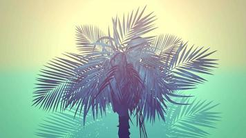 närbild tropiska palmer, sommarbakgrund