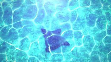 closeup arraia no mundo subaquático, fundo de verão