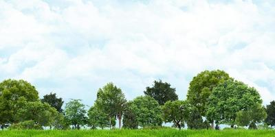3D illustration of grass and trees with view of cloudy skies photo