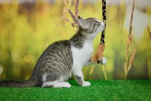 Silver tabby cat sitting on green background photo