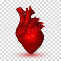 corazón. 3d corazón humano poligonal bajo. órgano de anatomía abstracta. concepto de medicina. vector