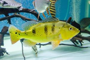Close-up of yellow fish