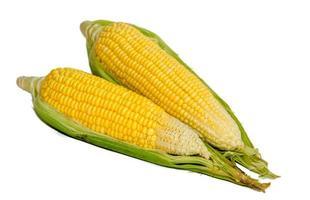 dos hojas de maiz foto