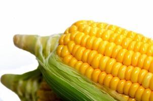 primer plano de maíz fresco foto