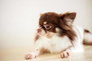 perro en el piso en la tienda de mascotas foto