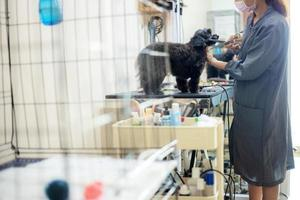 Woman cutting dog's hair and cleaning at pet store photo