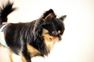 perro de pie en la tienda de mascotas foto