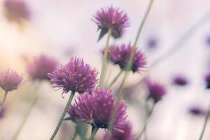 flor de cardo sobre fondo natural foto