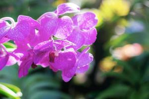 orquídea púrpura con fondo borroso foto