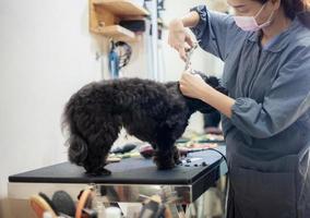 Woman cutting hair a dog photo