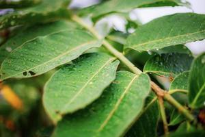 hojas verdes en el árbol con textura foto