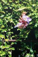 Purple flower in park