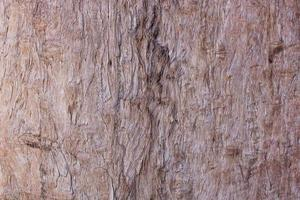 Corteza marrón o madera para fondo o textura. foto