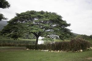 árbol verde en el campo de verano