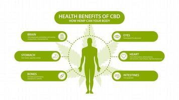 Hemp CBD benefits for your body, white poster with inphographic and silhouette of human body. Health benefits of Cannabidiol CBD from cannabis, hemp, marijuana, effect on body vector