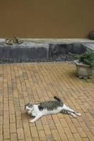 Domestic cat chilled in vintage garden