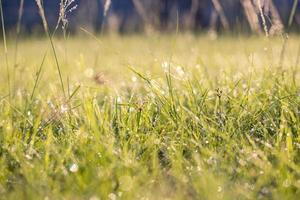 Green grass dew in the morning photo