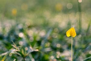 Close up of a yellow petaled flower photo