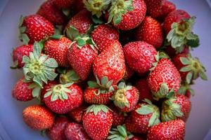 Strawberries in a plastic bowl photo