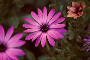 Pink flower in the spring season photo