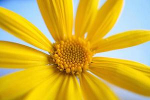 A beautiful yellow flower in the spring season photo