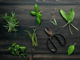 Fresh herbs and scissors photo
