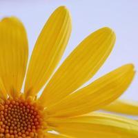 Beautiful yellow flower in the spring season photo