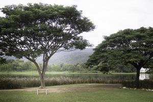 árbol verde en verano