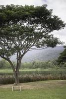 árbol verde en un verano