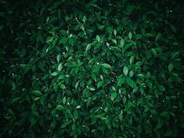 Green bushes and shrubbery photo