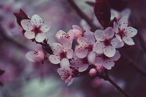 Beautiful pink flower in the spring season photo