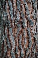 Tree trunk wooden textured background