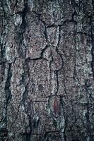 Close up of a tree trunk textured background