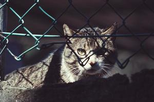 Gray stray cat portrait