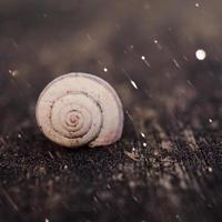 Little white snail in nature