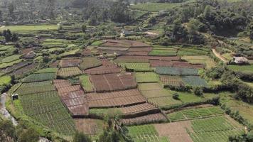 padrão de campos de terras agrícolas na plantação de chá, munnar, Índia. frente aérea video